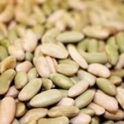 Green Flageolet Heirloom Beans