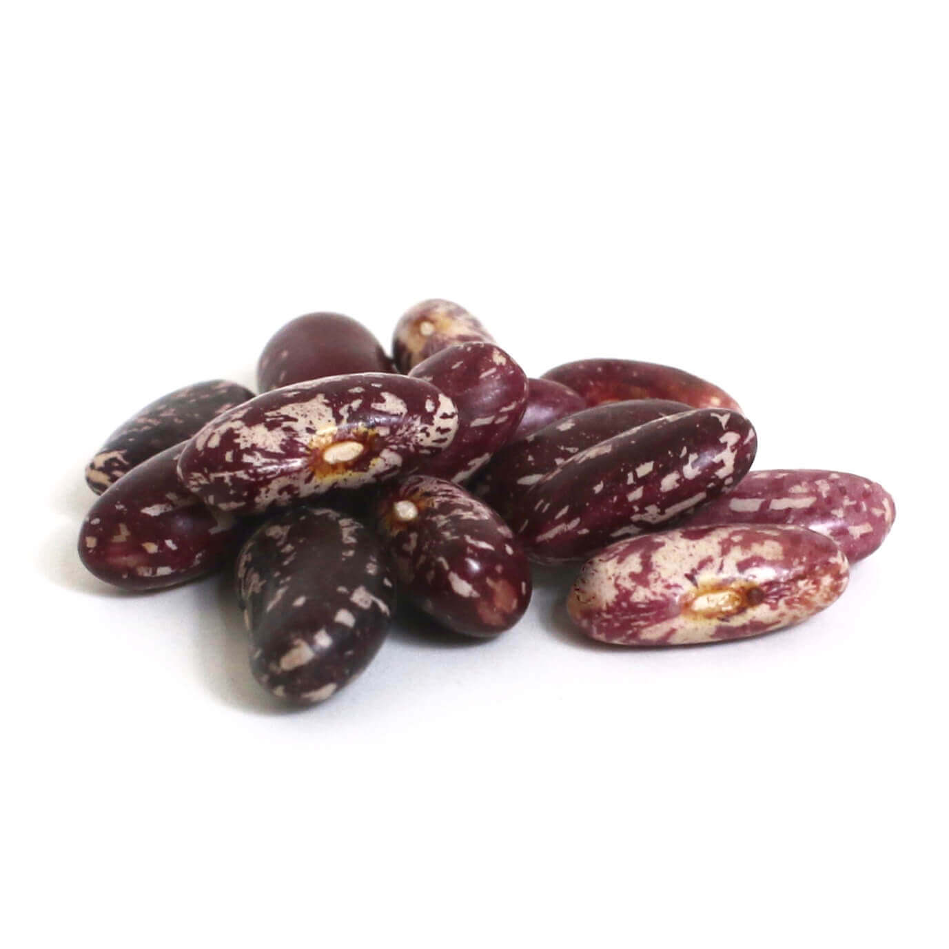 Spanish Tolosana Certified Organic Heirloom Beans | Shady Side Farm Holland Grand Rapids Michigan | Local Organic